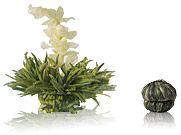 Blütentee - Weiße Affäre